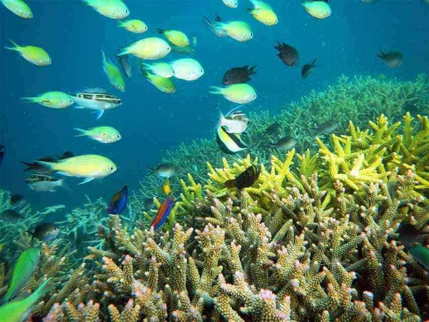 Fish and Coral at Gili Kondo